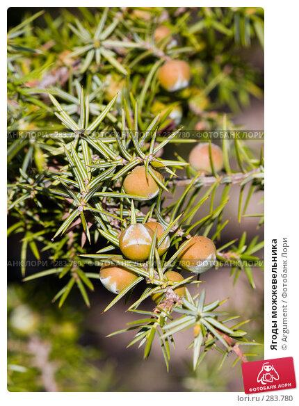 Ягоды можжевельника, фото № 283780, снято 26 апреля 2008 г. (c) Argument / Фотобанк Лори