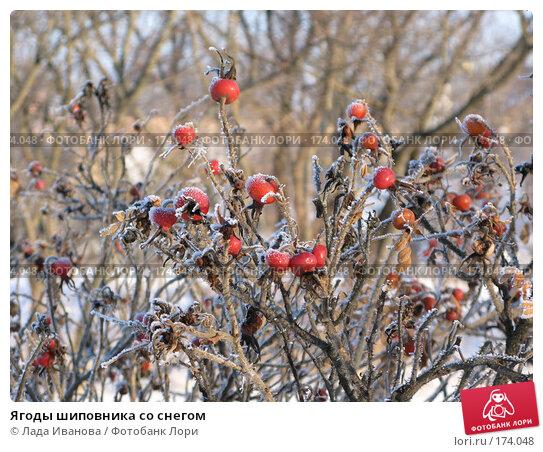 Ягоды шиповника со снегом, фото № 174048, снято 5 января 2008 г. (c) Лада Иванова / Фотобанк Лори