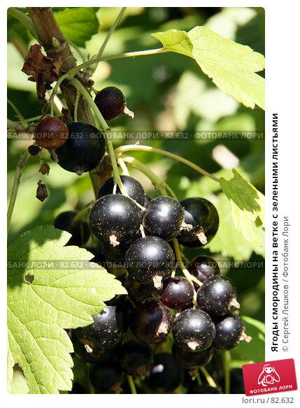 Купить «Ягоды смородины на ветке с зелеными листьями», фото № 82632, снято 28 июля 2007 г. (c) Сергей Лешков / Фотобанк Лори