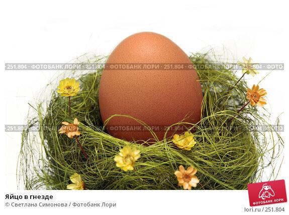 Яйцо в гнезде, фото № 251804, снято 15 апреля 2008 г. (c) Светлана Симонова / Фотобанк Лори