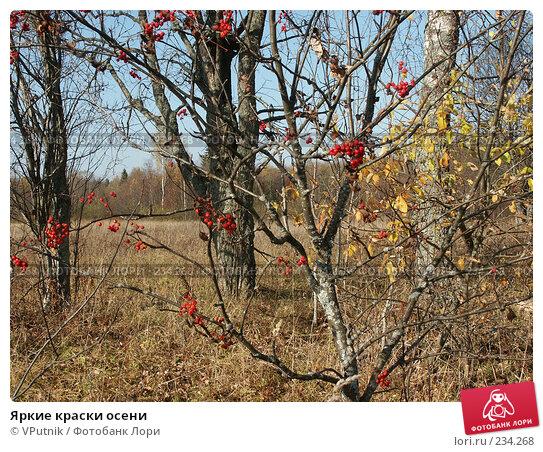 Яркие краски осени, фото № 234268, снято 10 октября 2005 г. (c) VPutnik / Фотобанк Лори