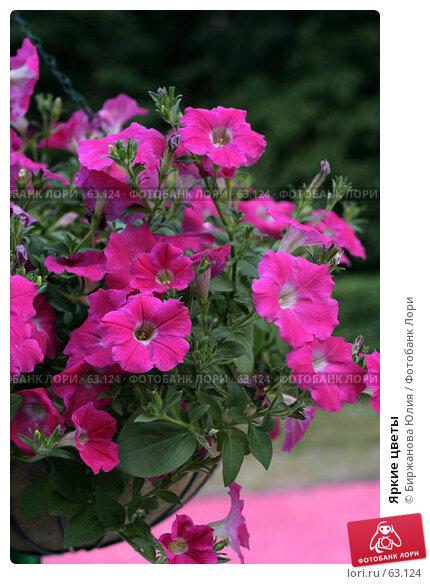 Купить «Яркие цветы», фото № 63124, снято 21 июня 2007 г. (c) Биржанова Юлия / Фотобанк Лори