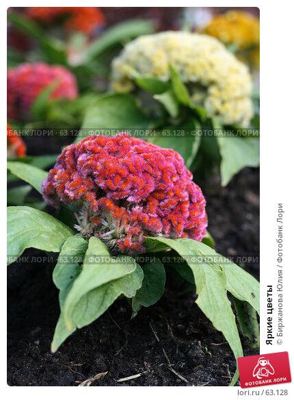 Яркие цветы, фото № 63128, снято 21 июня 2007 г. (c) Биржанова Юлия / Фотобанк Лори