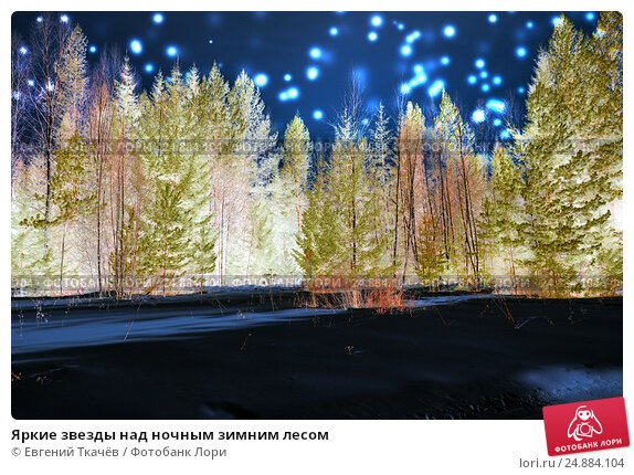 Купить «Яркие звезды над ночным зимним лесом», фото № 24884104, снято 1 марта 2015 г. (c) Евгений Ткачёв / Фотобанк Лори