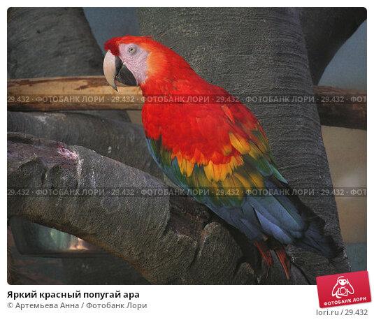 Яркий красный попугай ара, фото № 29432, снято 29 июня 2017 г. (c) Артемьева Анна / Фотобанк Лори