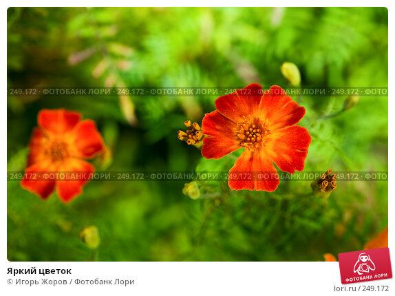 Яркий цветок, фото № 249172, снято 2 сентября 2007 г. (c) Игорь Жоров / Фотобанк Лори