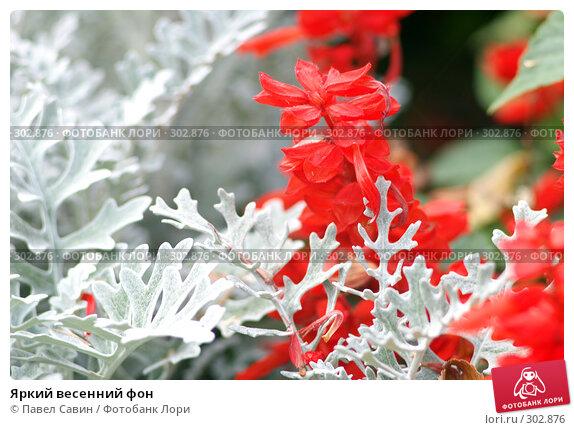 Купить «Яркий весенний фон», фото № 302876, снято 7 октября 2007 г. (c) Павел Савин / Фотобанк Лори