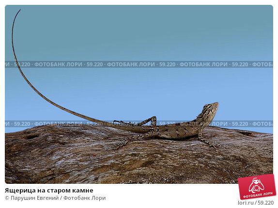 Ящерица на старом камне, фото № 59220, снято 22 июля 2017 г. (c) Парушин Евгений / Фотобанк Лори