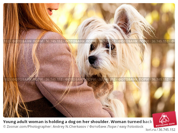 Young adult woman is holding a dog on her shoulder. Woman turned back. Стоковое фото, фотограф Zoonar.com/Photographer: Andrey N.Cherkasov / easy Fotostock / Фотобанк Лори