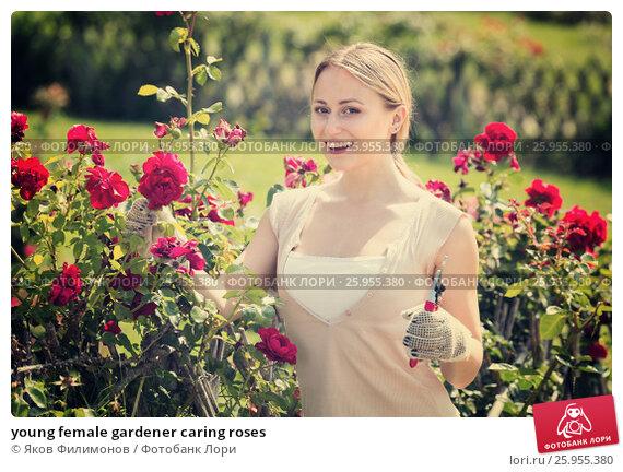 Купить «young female gardener caring roses», фото № 25955380, снято 18 июля 2018 г. (c) Яков Филимонов / Фотобанк Лори
