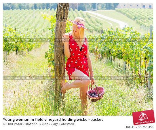 Young woman in field vineyard holding wicker-basket. Стоковое фото, фотограф Emil Pozar / age Fotostock / Фотобанк Лори