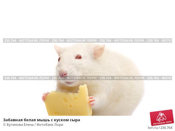 Забавная белая мышь с куском сыра, фото № 230764, снято 24 марта 2008 г. (c) Бутинова Елена / Фотобанк Лори