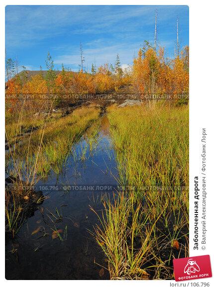 Заболоченная дорога, фото № 106796, снято 20 сентября 2007 г. (c) Валерий Александрович / Фотобанк Лори