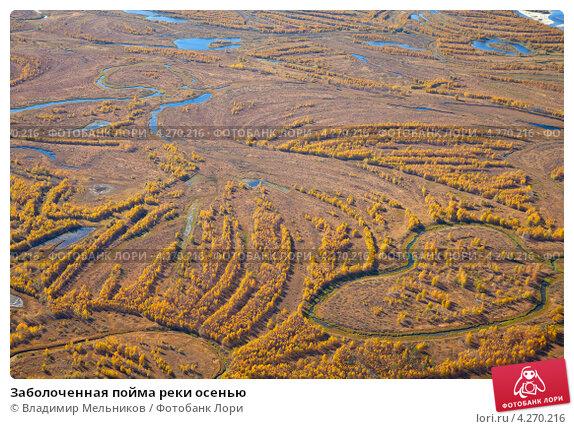 Купить «Заболоченная пойма реки осенью», фото № 4270216, снято 15 сентября 2011 г. (c) Владимир Мельников / Фотобанк Лори