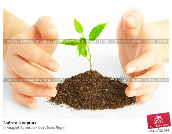 Забота о корнях, фото № 38036, снято 2 мая 2007 г. (c) Андрей Армягов / Фотобанк Лори