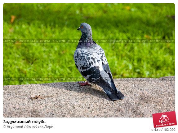 Задумчивый голубь, фото № 102020, снято 26 апреля 2017 г. (c) Argument / Фотобанк Лори