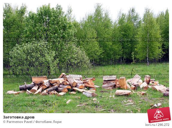 Заготовка дров, фото № 290272, снято 11 мая 2008 г. (c) Parmenov Pavel / Фотобанк Лори