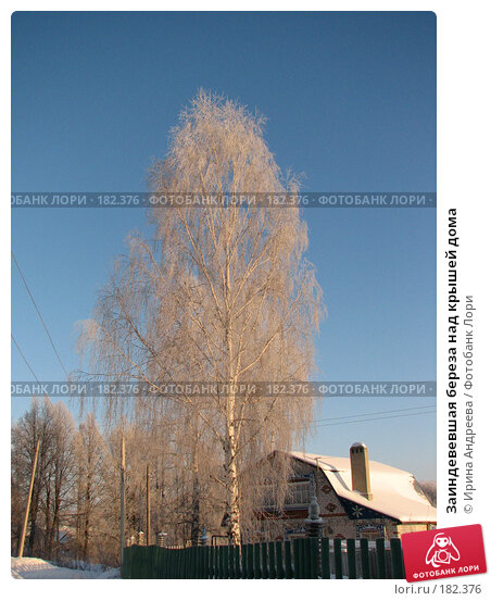 Заиндевевшая береза над крышей дома, фото № 182376, снято 20 января 2008 г. (c) Ирина Андреева / Фотобанк Лори