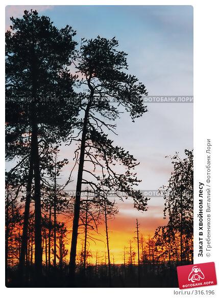 Закат в хвойном лесу, фото № 316196, снято 29 июня 2017 г. (c) Гребенников Виталий / Фотобанк Лори