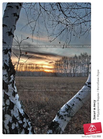 Закат в лесу, фото № 122988, снято 21 октября 2007 г. (c) Мударисов Вадим / Фотобанк Лори