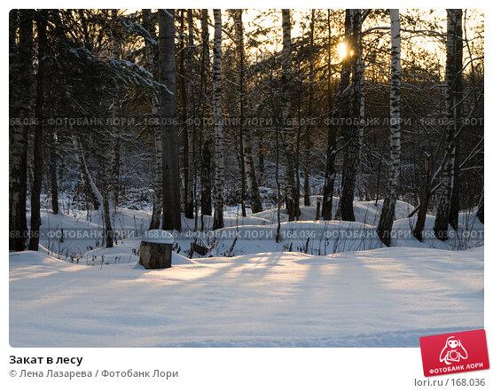 Купить «Закат в лесу», фото № 168036, снято 1 декабря 2007 г. (c) Лена Лазарева / Фотобанк Лори