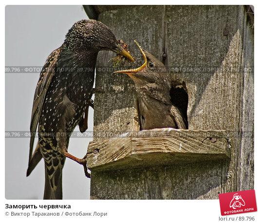 Заморить червячка, эксклюзивное фото № 89796, снято 27 мая 2007 г. (c) Виктор Тараканов / Фотобанк Лори