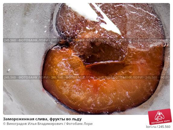 Замороженная слива, фрукты во льду, фото № 245560, снято 7 декабря 2007 г. (c) Виноградов Илья Владимирович / Фотобанк Лори
