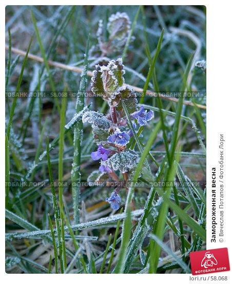 Купить «Замороженная весна», фото № 58068, снято 28 мая 2007 г. (c) Вячеслав Потапов / Фотобанк Лори