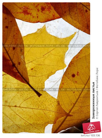 Купить «Замороженные листья», фото № 103136, снято 19 апреля 2018 г. (c) Сергей Лаврентьев / Фотобанк Лори