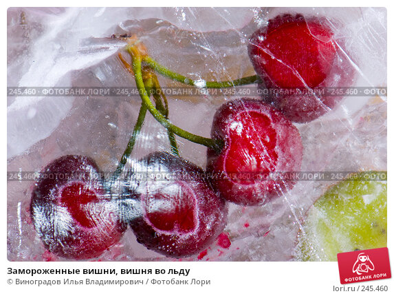 Замороженные вишни, вишня во льду, фото № 245460, снято 7 декабря 2007 г. (c) Виноградов Илья Владимирович / Фотобанк Лори