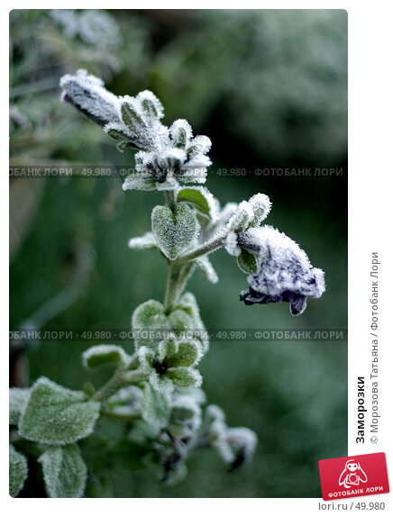 Купить «Заморозки», фото № 49980, снято 15 октября 2004 г. (c) Морозова Татьяна / Фотобанк Лори