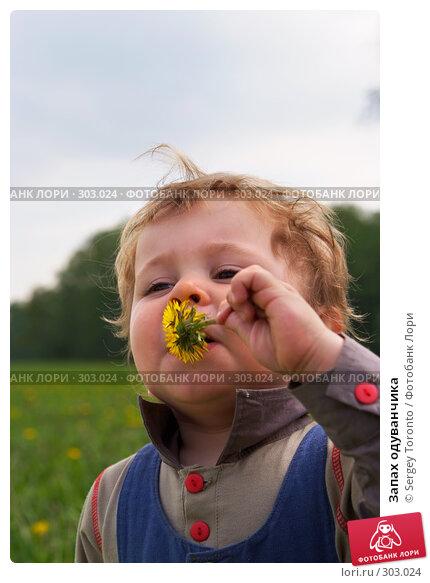 Запах одуванчика, фото № 303024, снято 11 мая 2008 г. (c) Sergey Toronto / Фотобанк Лори