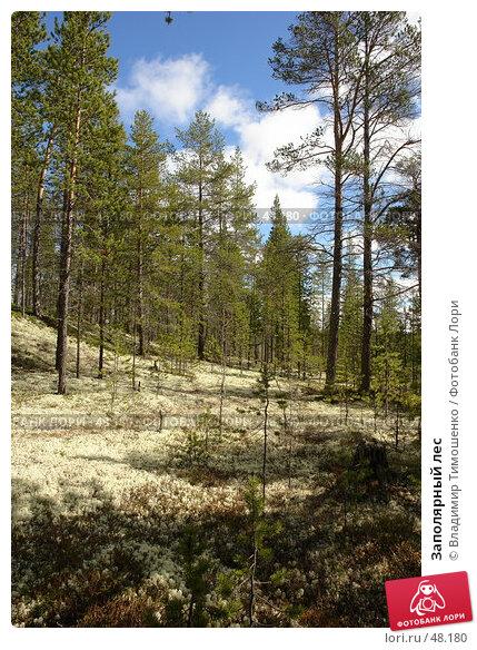 Заполярный лес, фото № 48180, снято 27 мая 2007 г. (c) Владимир Тимошенко / Фотобанк Лори