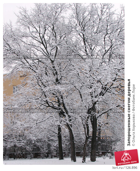 Запорошенные снегом деревья, фото № 126896, снято 16 ноября 2007 г. (c) Ольга Хорькова / Фотобанк Лори