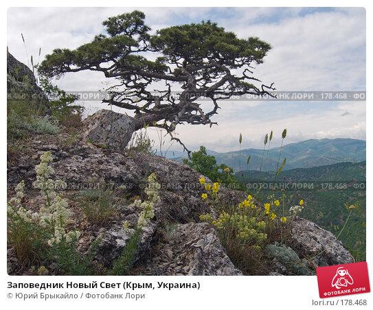 Заповедник Новый Свет (Крым, Украина), фото № 178468, снято 8 июня 2006 г. (c) Юрий Брыкайло / Фотобанк Лори