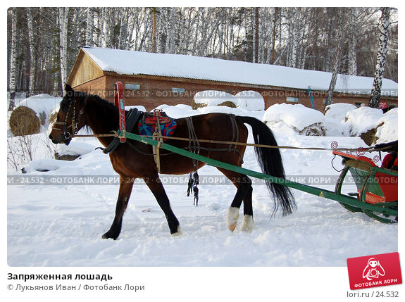 Запряженная лошадь, фото № 24532, снято 6 января 2007 г. (c) Лукьянов Иван / Фотобанк Лори