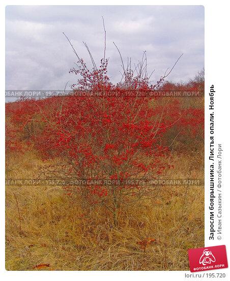 Заросли боярышника. Листья опали. Ноябрь, фото № 195720, снято 13 ноября 2004 г. (c) Иван Сазыкин / Фотобанк Лори