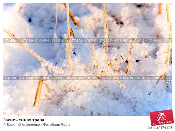 Заснеженная трава, фото № 174608, снято 6 января 2008 г. (c) Василий Аксюченко / Фотобанк Лори