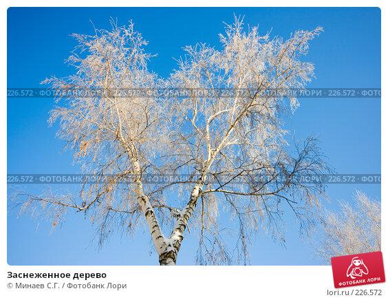 Заснеженное дерево, фото № 226572, снято 15 декабря 2007 г. (c) Минаев С.Г. / Фотобанк Лори