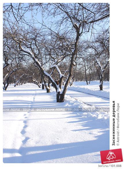 Заснеженные деревья, фото № 101008, снято 11 февраля 2007 г. (c) Astroid / Фотобанк Лори