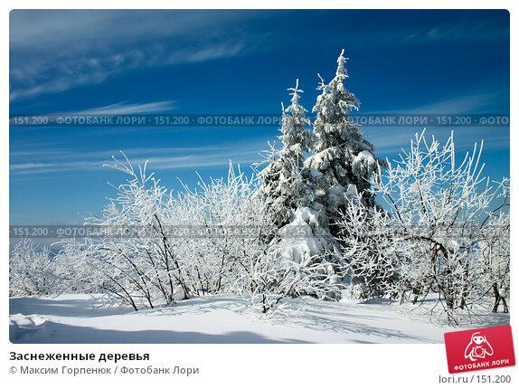 Заснеженные деревья, фото № 151200, снято 7 марта 2006 г. (c) Максим Горпенюк / Фотобанк Лори