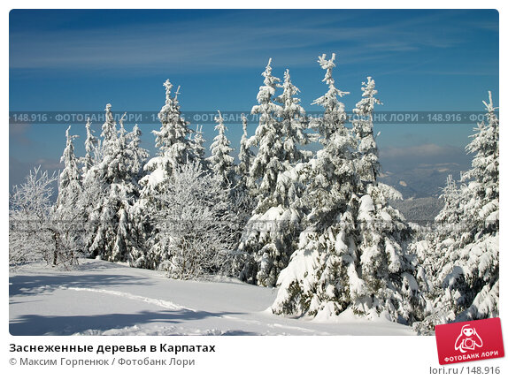 Заснеженные деревья в Карпатах, фото № 148916, снято 7 марта 2006 г. (c) Максим Горпенюк / Фотобанк Лори