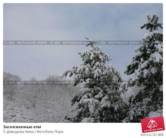 Заснеженные ели, фото № 21404, снято 31 января 2007 г. (c) Давыдова Нина / Фотобанк Лори