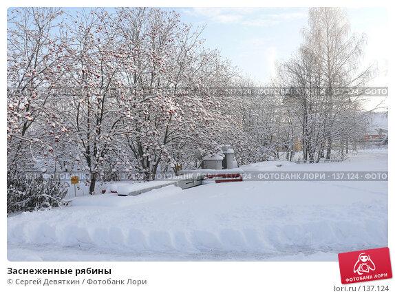 Заснеженные рябины, фото № 137124, снято 4 декабря 2007 г. (c) Сергей Девяткин / Фотобанк Лори