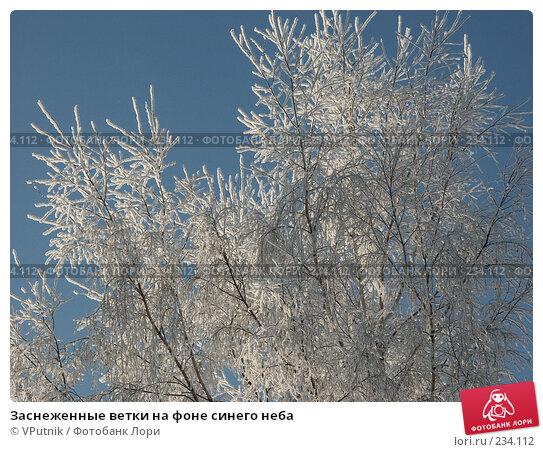 Заснеженные ветки на фоне синего неба, фото № 234112, снято 30 ноября 2004 г. (c) VPutnik / Фотобанк Лори