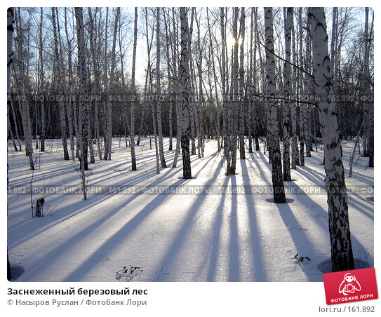 Заснеженный березовый лес, фото № 161892, снято 4 февраля 2007 г. (c) Насыров Руслан / Фотобанк Лори