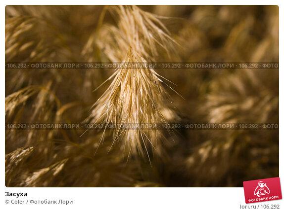 Засуха, фото № 106292, снято 6 июня 2007 г. (c) Coler / Фотобанк Лори