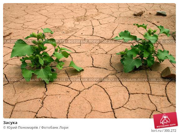 Засуха, фото № 300272, снято 2 сентября 2006 г. (c) Юрий Пономарёв / Фотобанк Лори