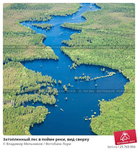 Затопленный лес в пойме реки, вид сверху, фото № 25769904, снято 19 июня 2015 г. (c) Владимир Мельников / Фотобанк Лори