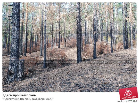 Здесь прошел огонь, эксклюзивное фото № 207896, снято 20 сентября 2007 г. (c) Александр Щепин / Фотобанк Лори